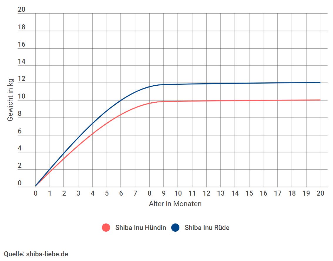 Shiba Inu Gewichtszunahme