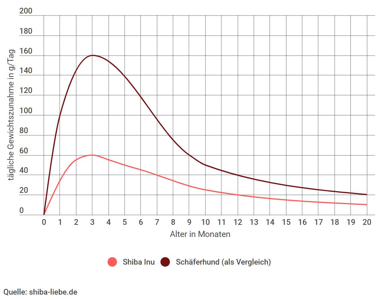 Shiba Inu tägliche Gewichtszunahme