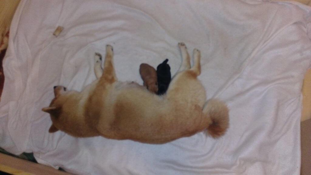 Laika kurz nach der Geburt