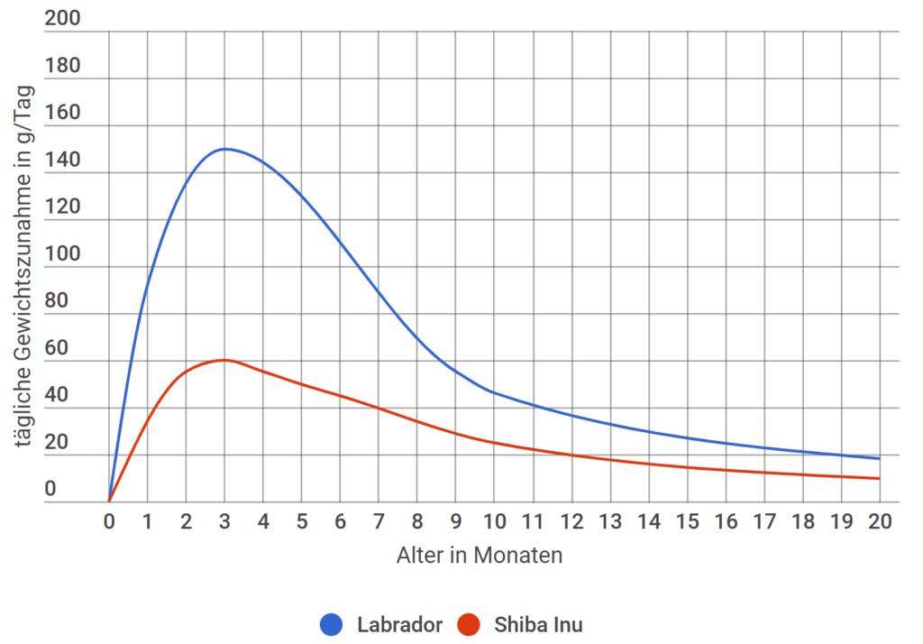 labrador tägliche gewichtszunahme