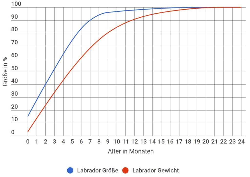 labrador-wachstum-gewicht
