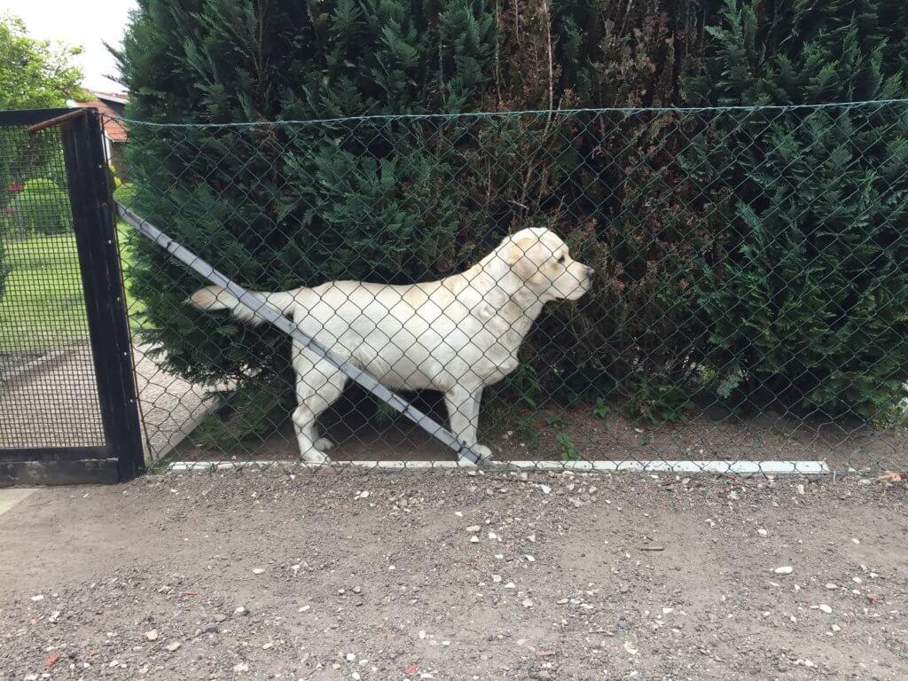 Wie hoch muss ein Hundezaun sein?