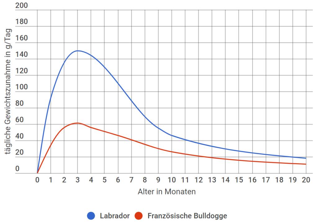 Französische Bulldogge tägliche Gewichtszunahme