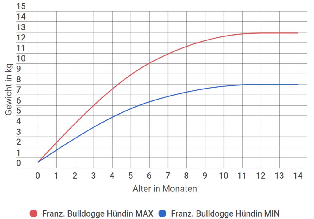 Französische Bulldogge Wachstum Hündin