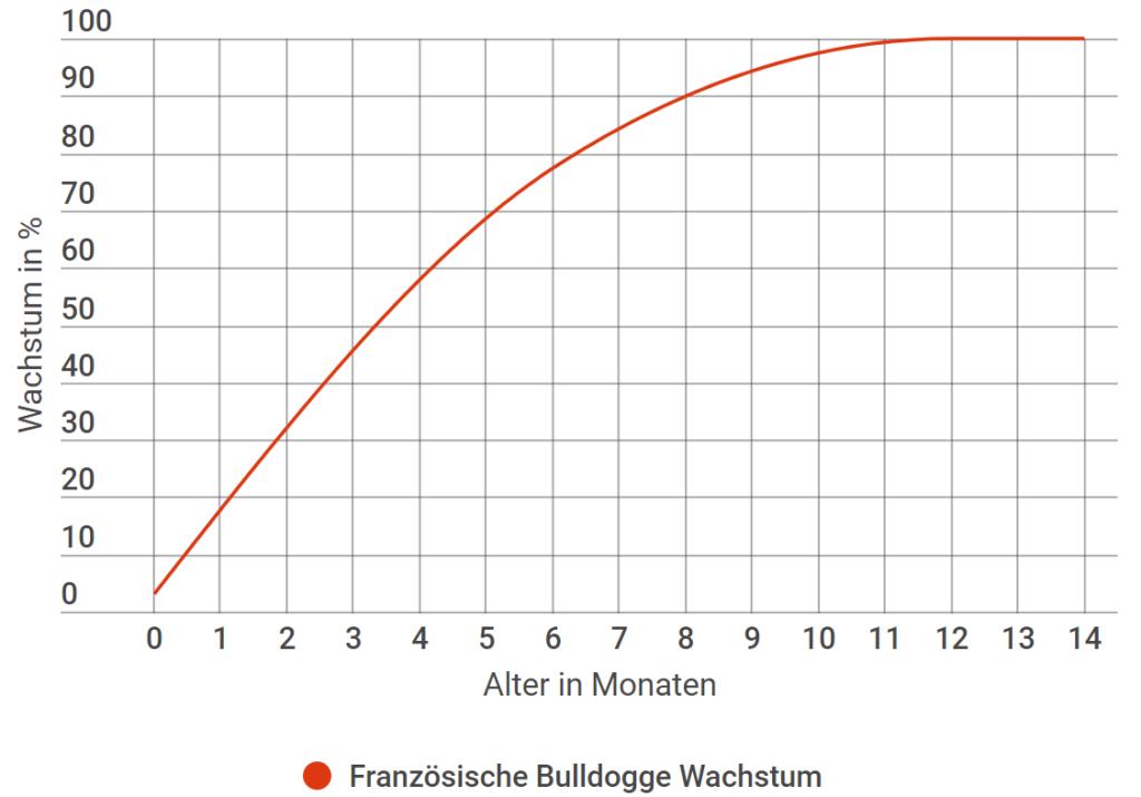 Französische Bulldogge Wachstum in Prozent