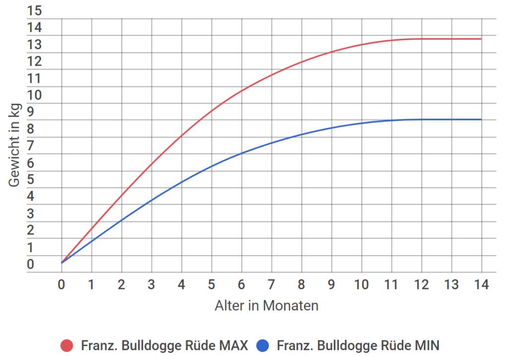 Französische Bulldogge Wachstum Rüde