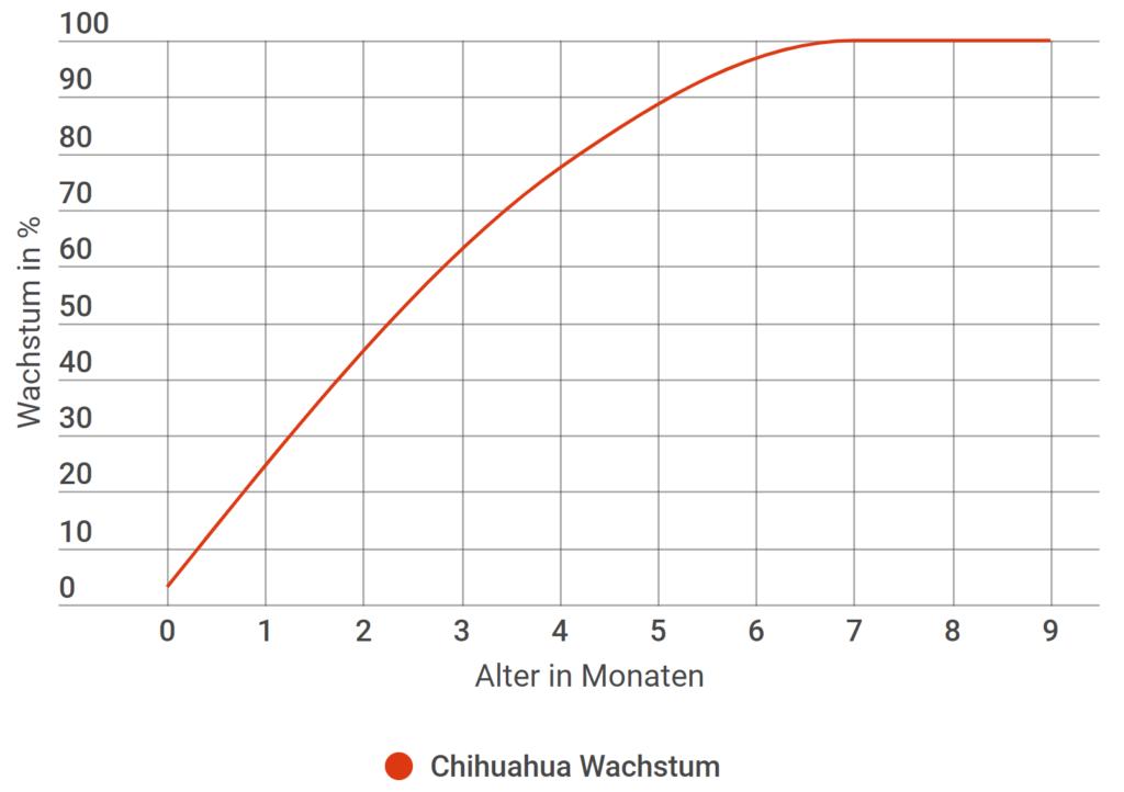 Chihuahua Wachstum in Prozent