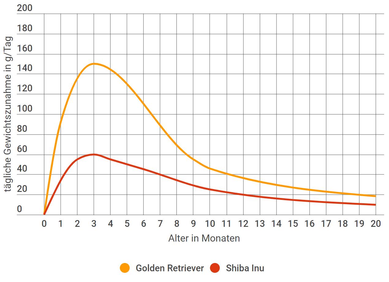 Golden Retriever tägliche Gewichtszunahme