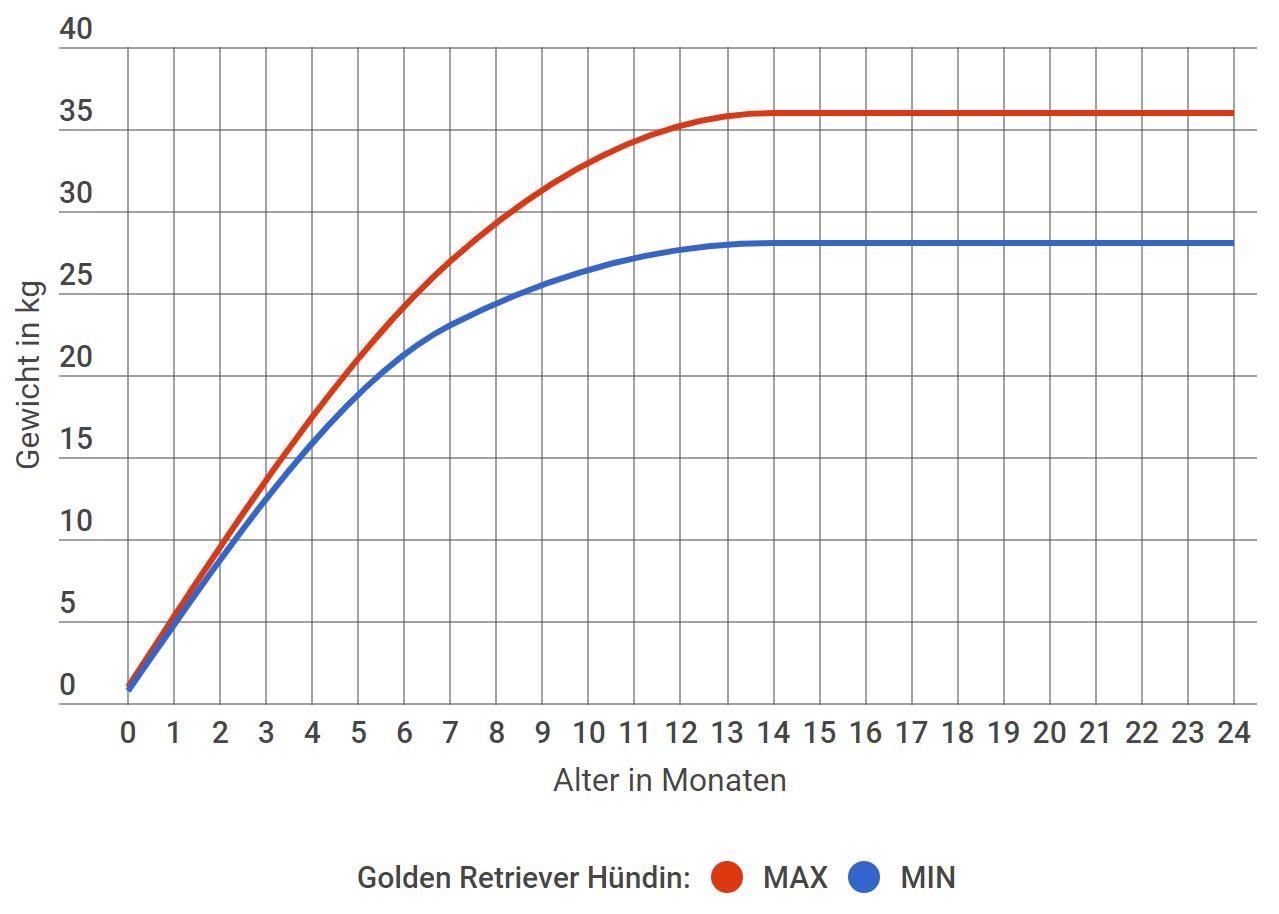 Golden Retriever Wachstum Hündin