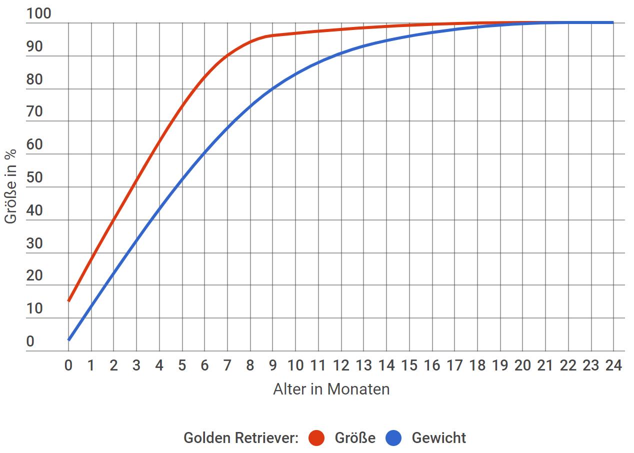 Golden Retriever Wachstum in Prozent