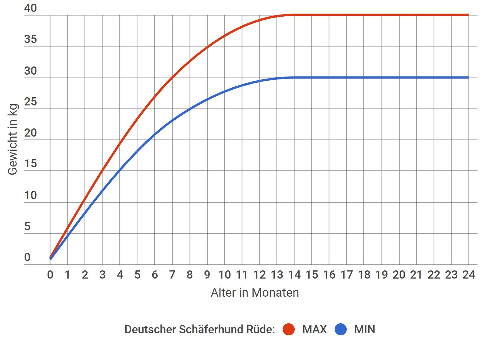 Deutscher Schäferhund Wachstum Rüde