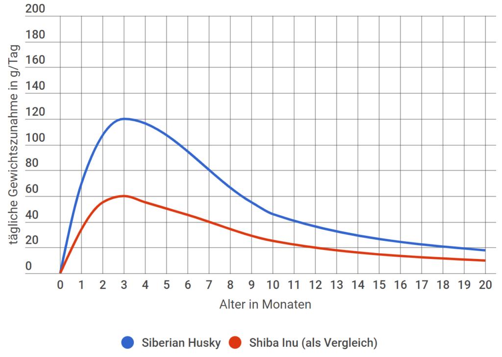 Siberian Husky Tägliche Gewichtszunahme
