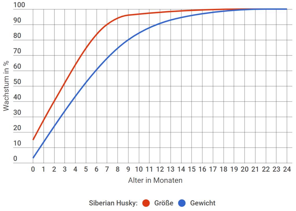 Siberian Husky Wachstum in Prozent