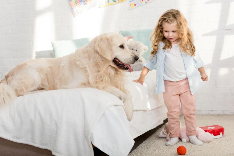 Was gehört in eine Hausapotheke für den Hund?