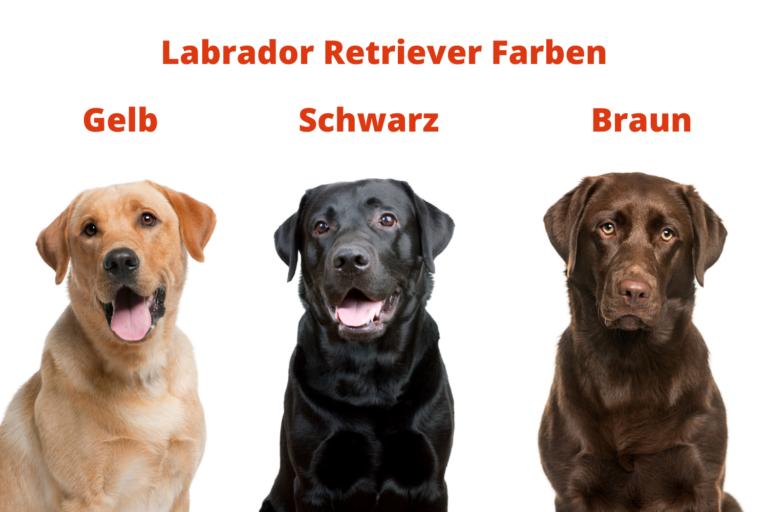 Labrador Farben