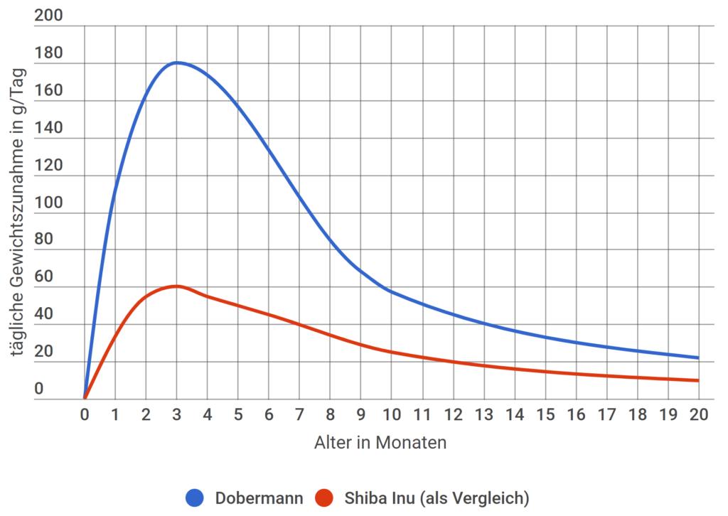Dobermann tägliche Gewichtszunahme