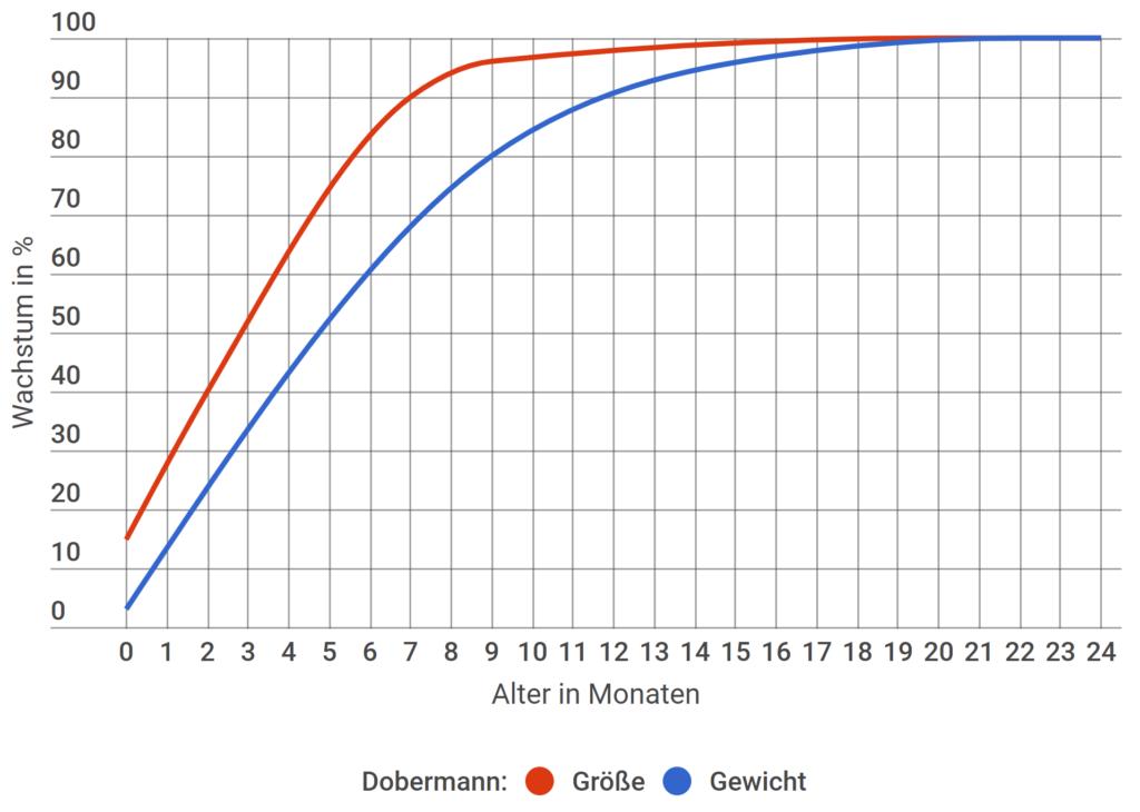 Dobermann Wachstum in Prozent