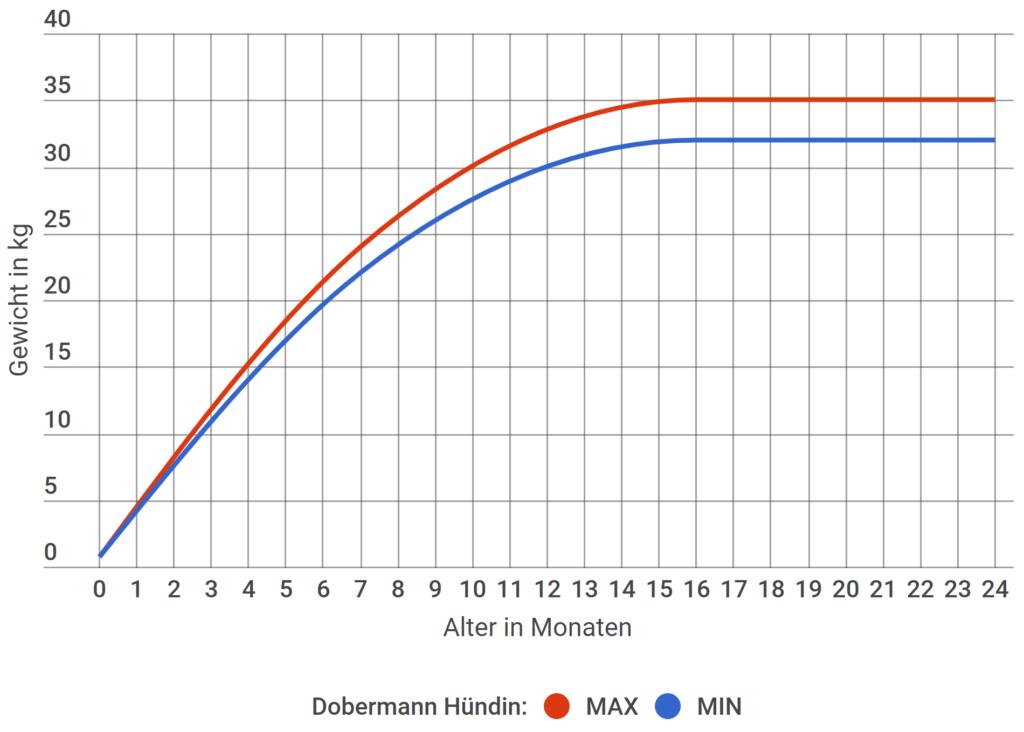 Dobermann Wachstum Hündin