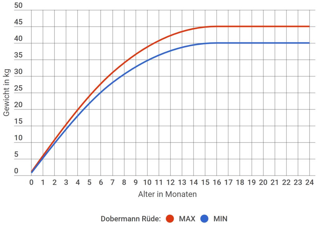 Dobermann Wachstum Rüde
