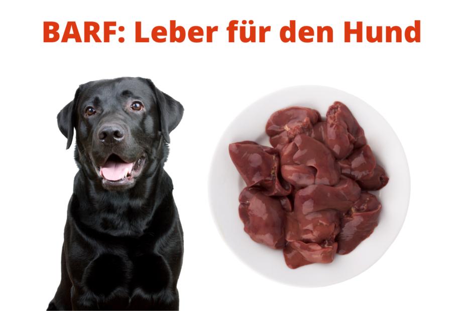 BARF: Leber für den Hund