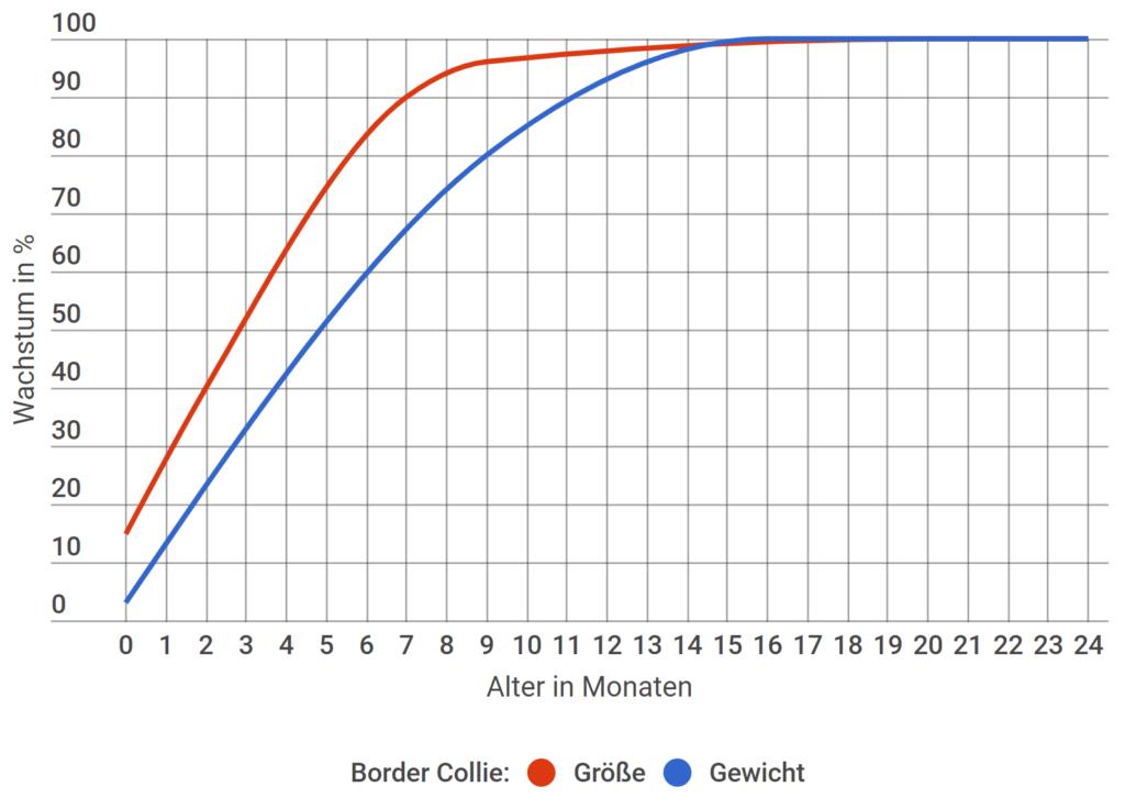 Border Collie Wachstum in Prozent