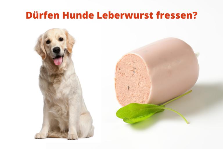 Dürfen Hunde Leberwurst fressen?