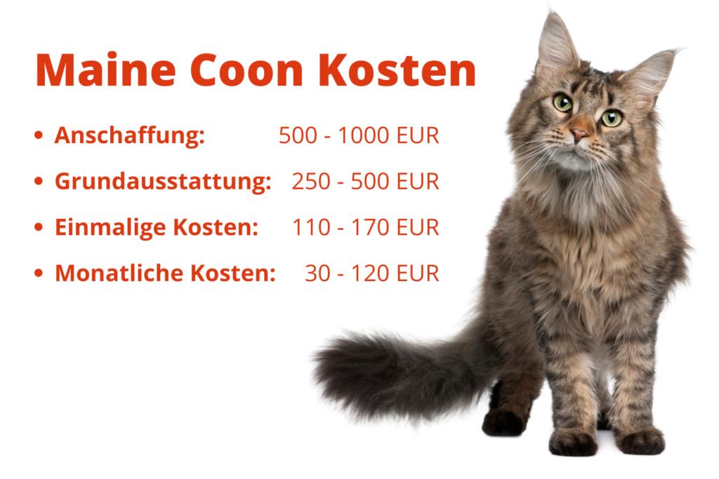 Kosten Katze Pro Monat