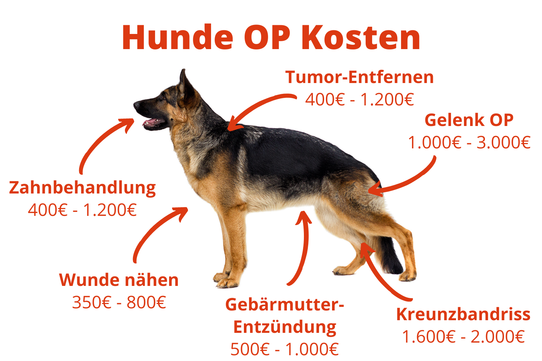 Hunde OP Kosten