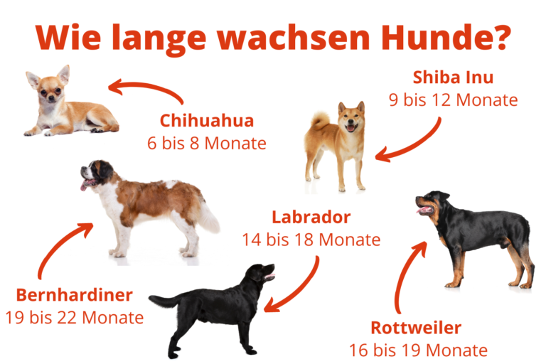 Wie lange wachsen Hunde?