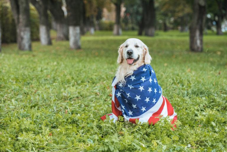 Beliebte Hundenamen aus USA