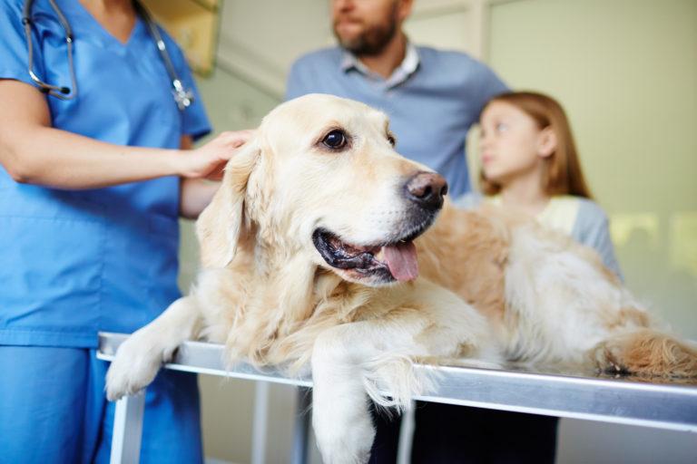 Ein Besuch beim Tierarzt – das kostet die Behandlung von Hunden